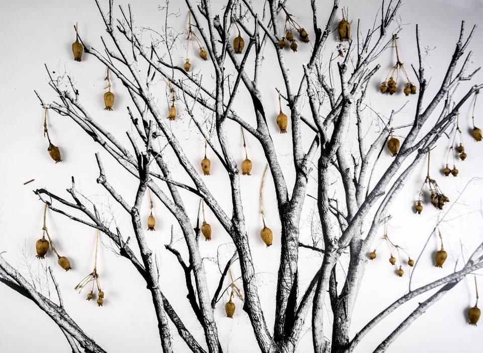 Ettore Belgrado - I colori dell'inverno