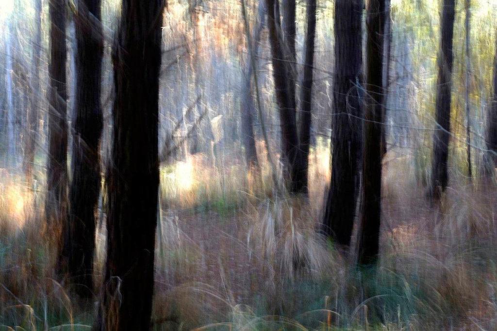 Marisa Scarso - I colori dell'inverno